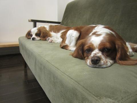 ソファーで・・・おやすみなさい。